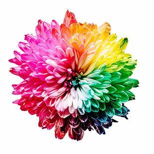 花 颜色 鲜花