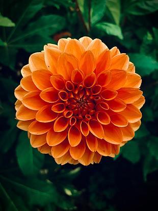 花 夏天 橙色