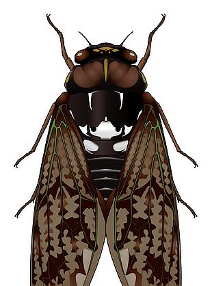 昆虫蝉知了矢量素材