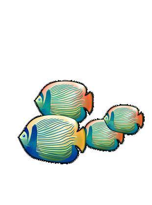手绘多宝鱼