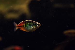 鱼 彩色鳞片 水中鱼