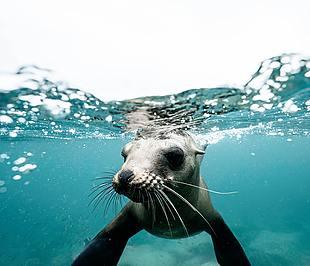 海豹 水下海豹 自然 水下动物