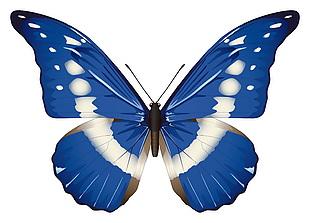 蓝色蝴蝶矢量素材