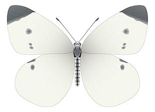 灰色蝴蝶矢量素材