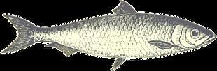 魚 元素 個性