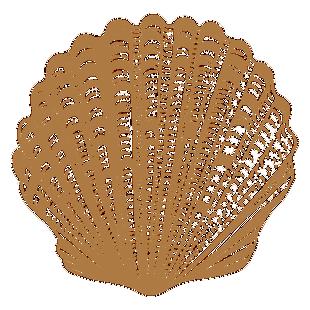贝壳图片素材