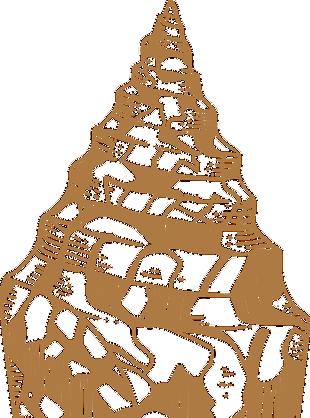 海螺图片素材