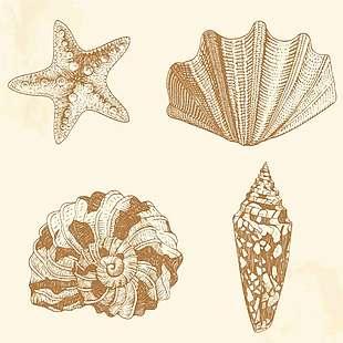 海螺贝壳矢量图
