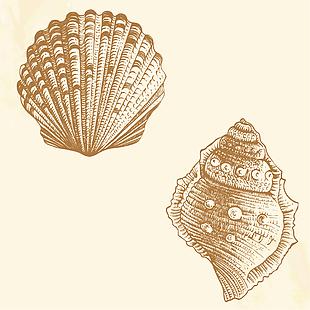 海螺贝壳矢量素材