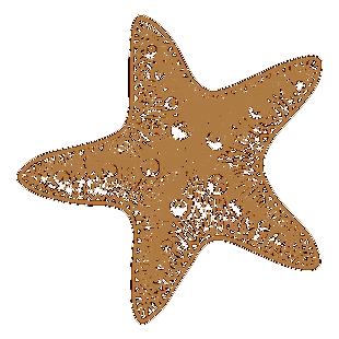 海星图片素材