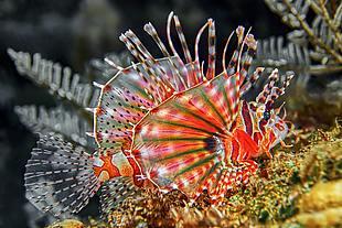 自然 動物 深海動物
