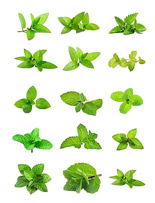 绿叶 叶子 树叶 psd透明素材