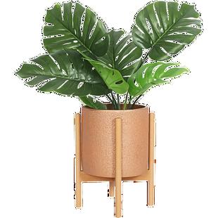 綠植盆栽龜背葉植物