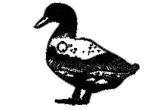 鴨子-板繪