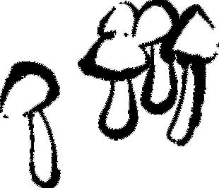蘑菇-板繪
