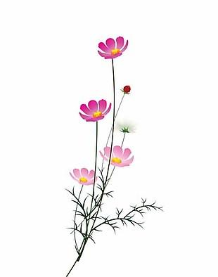 花朵 紋理 裝飾畫