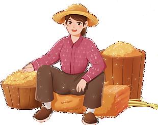 秋天節氣農民收小麥