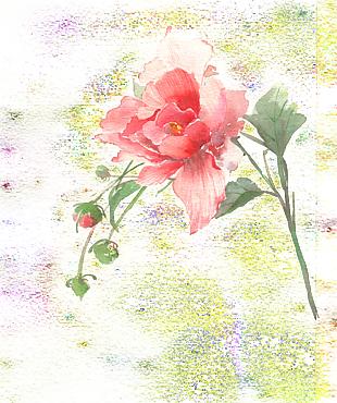 古風唯美水彩插畫玫瑰花